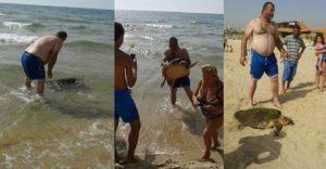 Estas personas casi matan a esta tortuga cuando la sacaron del mar para tomarse selfies