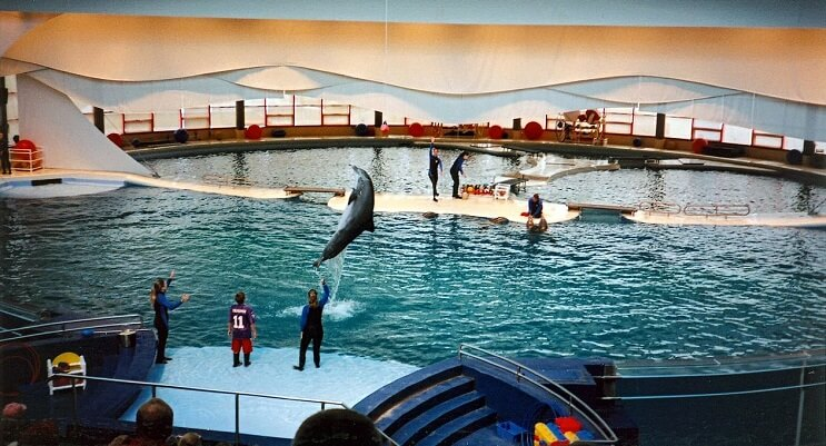Este acuario norteamericano anunció que liberarán a todos sus delfines en cautiverio 05