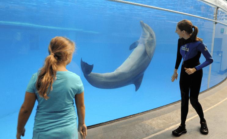 Este acuario norteamericano anunció que liberarán a todos sus delfines en cautiverio 06
