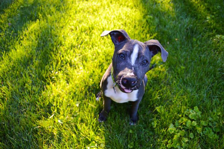 Este cachorro tenía una rara enfermedad y ahora tiene una sonrisa imposible de quitar 06