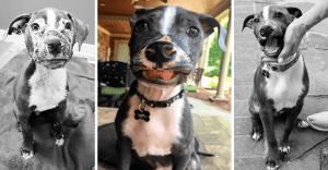Este cachorro tenía una rara enfermedad y ahora tiene una sonrisa imposible de quitar