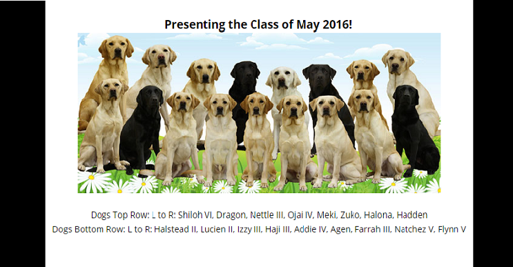Este cuadripléjico conoció a su perro guía tras años de entrenamiento. La presentación les encantará. 05