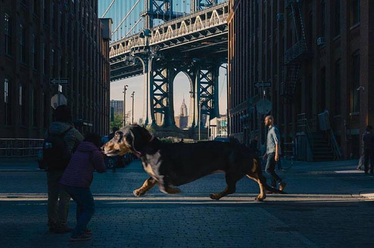 Este fotógrafo nos ayuda a ver lo grande que es su perro salchicha 02