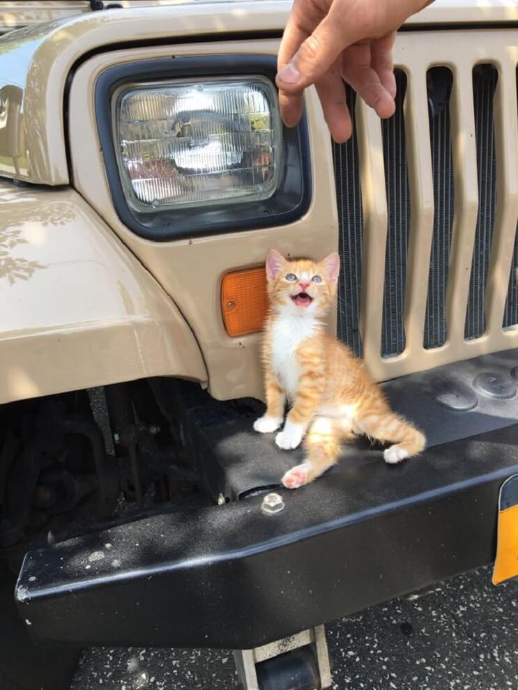 Este gatito no podía caminar pero con su nuevo par de ruedas nada lo detiene 04