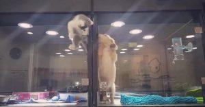Este gato escapó de su cubil para visitar a su amigo perro