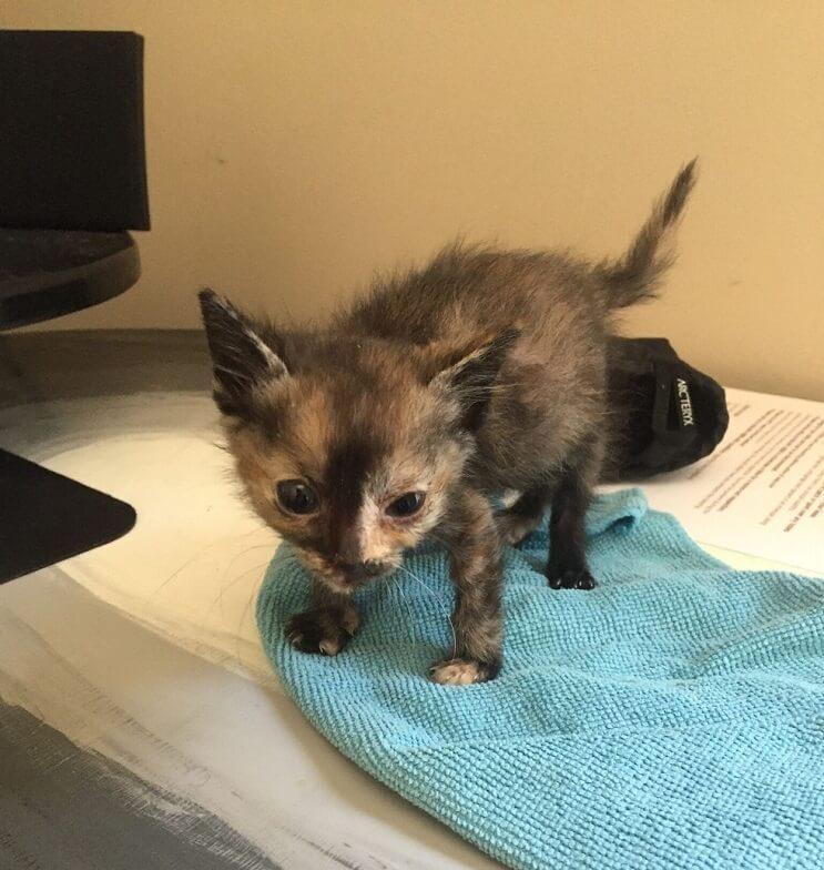 Este gato fue encontrado en la lluvia y ahora goza de un hogar donde es feliz 03
