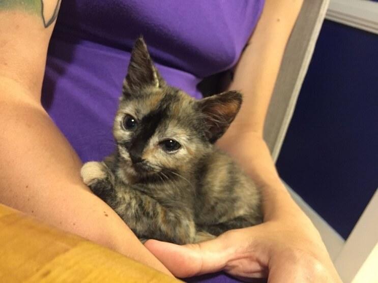 Este gato fue encontrado en la lluvia y ahora goza de un hogar donde es feliz 08