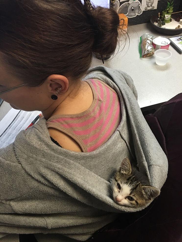 Este gato fue encontrado temblando y empapado por la lluvia. Ahora tiene un cálido hogar 04