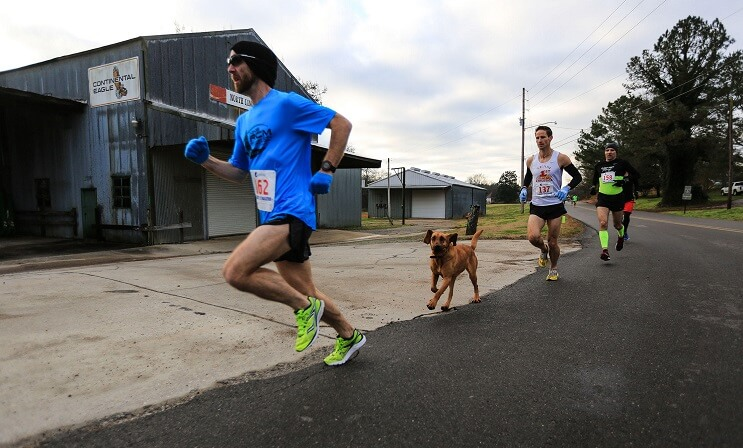 Este perro irrumpió en una maratón y se ganó una medalla por llegar en séptimo puesto 01