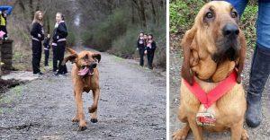 Este perro irrumpió en una maratón y ganó una medalla por llegar en séptimo puesto