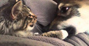 Este perro sacó a este gato de un albergue y se convirtió en su mejor amigo