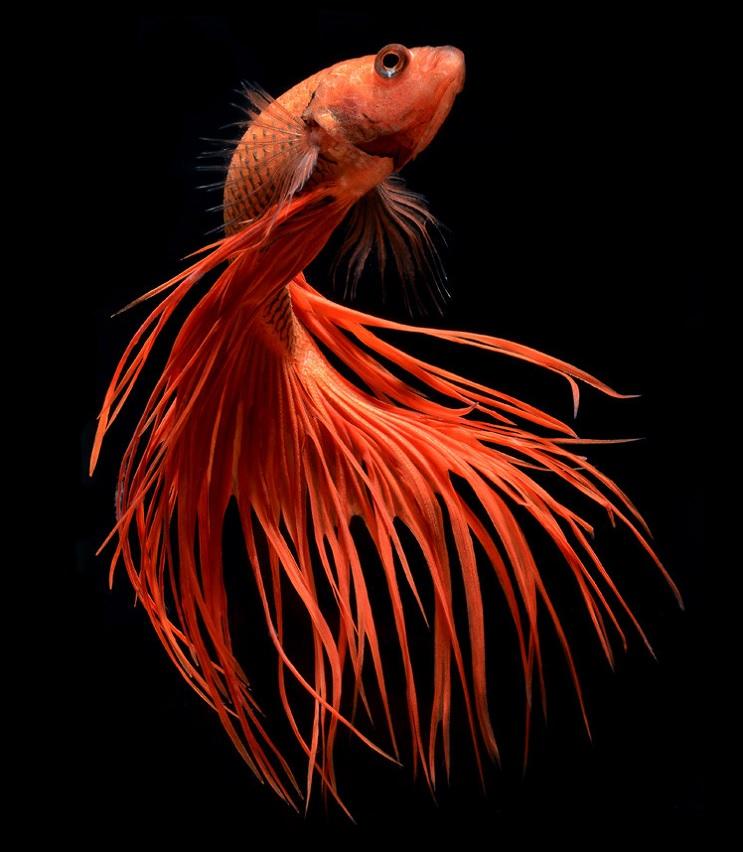 Estos retratos muestran que los peces también tienen personalidad 1