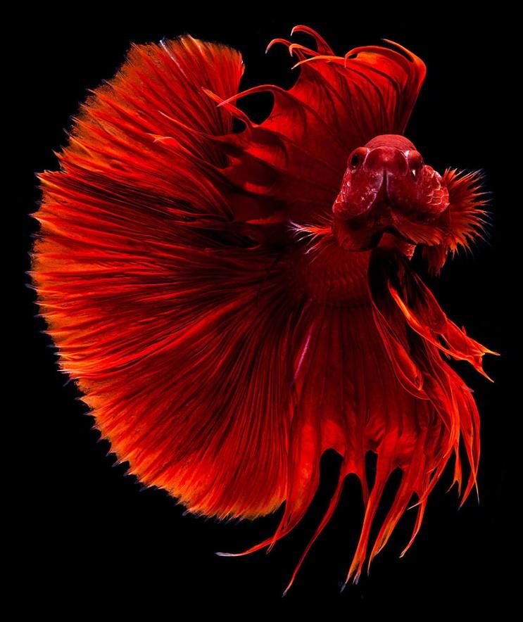 Estos retratos muestran que los peces también tienen personalidad 10.1