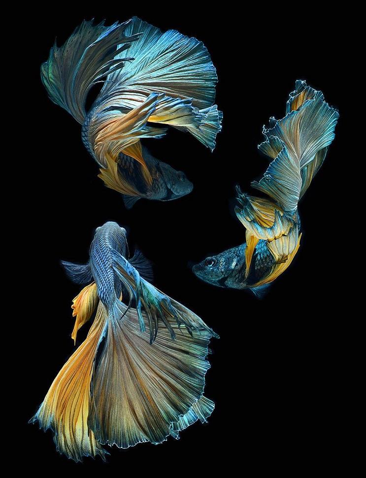 Estos retratos muestran que los peces también tienen personalidad 11.1