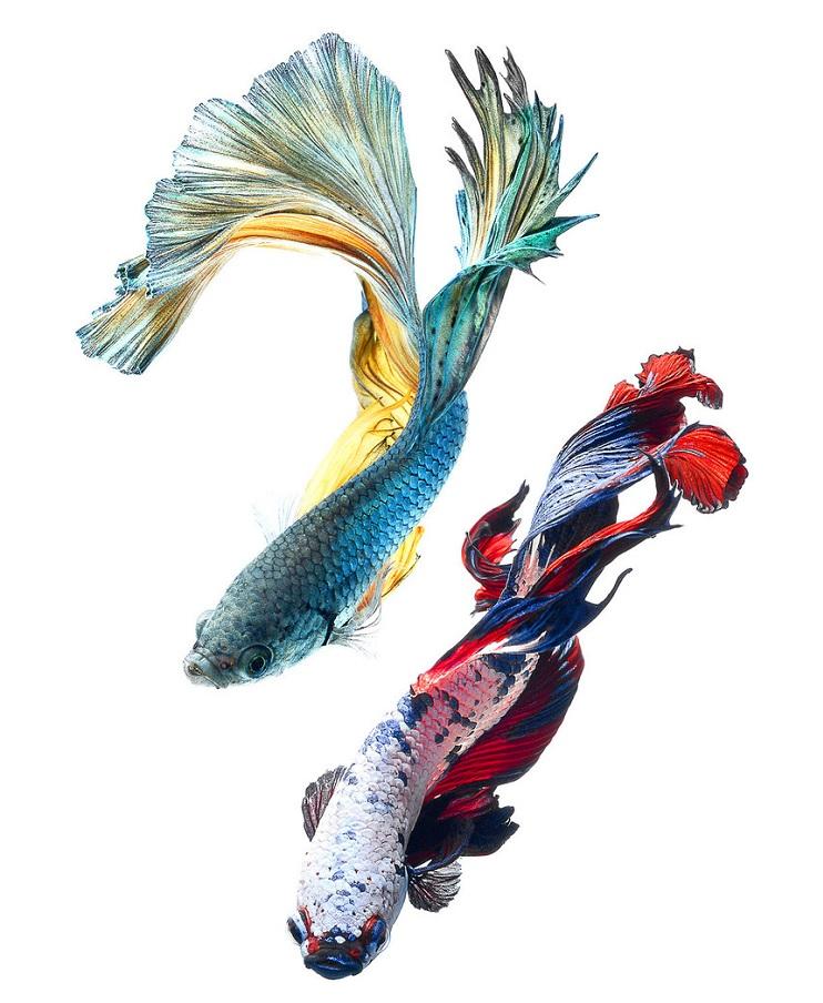 Estos retratos muestran que los peces también tienen personalidad 12.1
