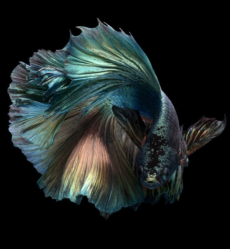 Estos retratos muestran que los peces también tienen personalidad 14.2
