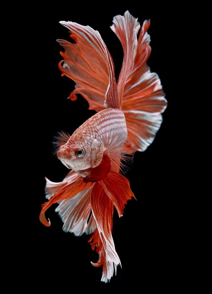 Estos retratos muestran que los peces también tienen personalidad 15.1