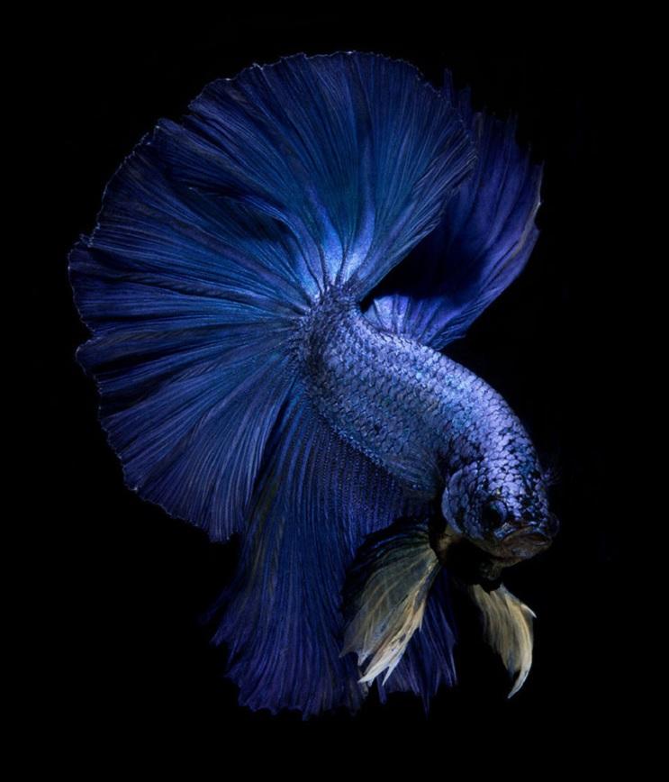 Estos retratos muestran que los peces también tienen personalidad 2