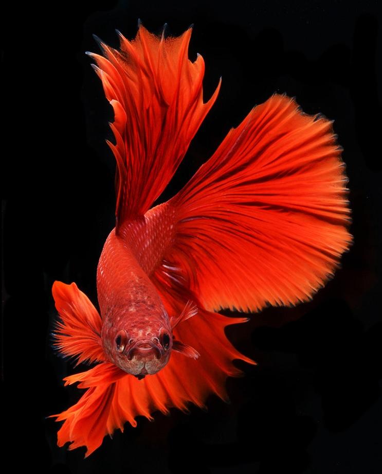 Estos retratos muestran que los peces también tienen personalidad 4.1