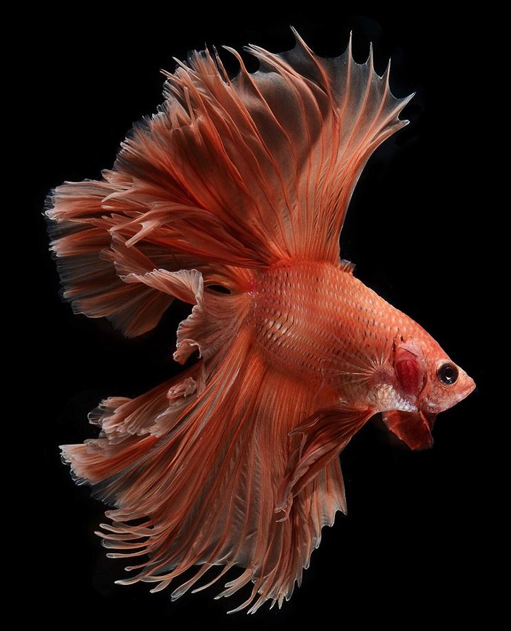 Estos retratos muestran que los peces también tienen personalidad 8.1