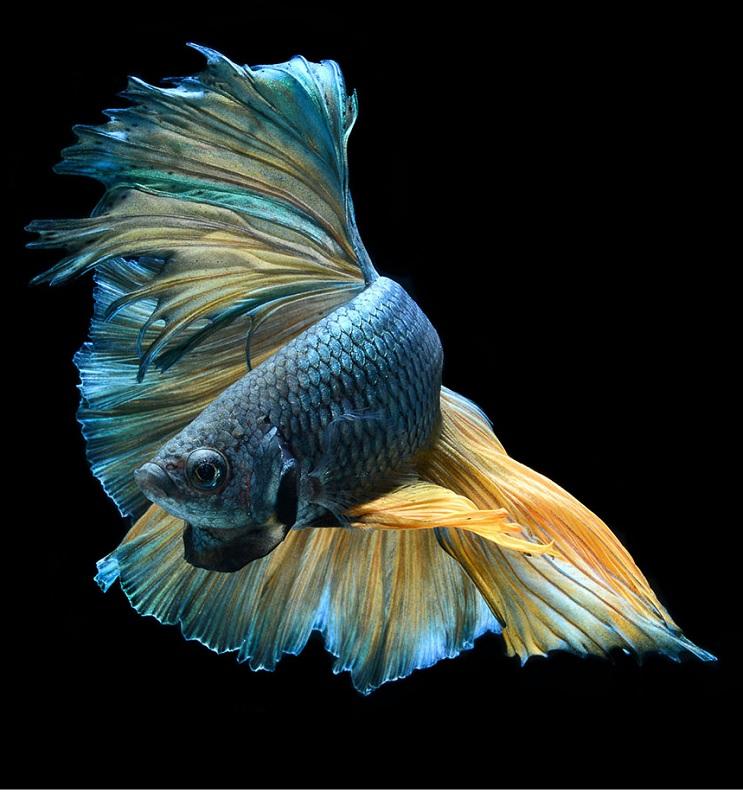 Estos retratos muestran que los peces también tienen personalidad 9.1