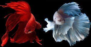 Estos retratos muestran que los peces también tienen personalidad