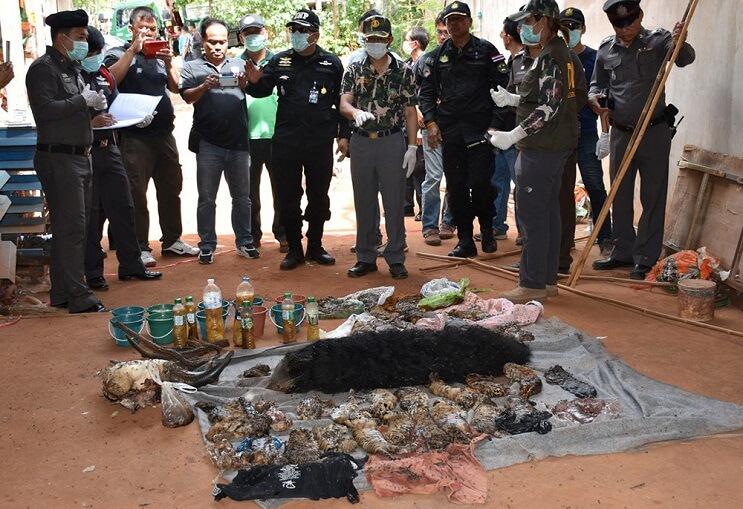 Hallan 40 cachorros de tigre en peligro de extinción muertos dentro de Templo Budista 01-1