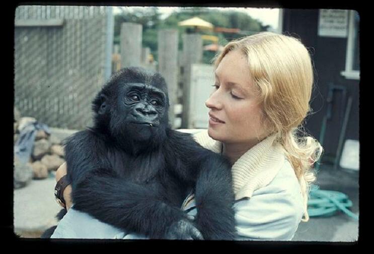 Koko, el gorila que se comunica con los humanos 01