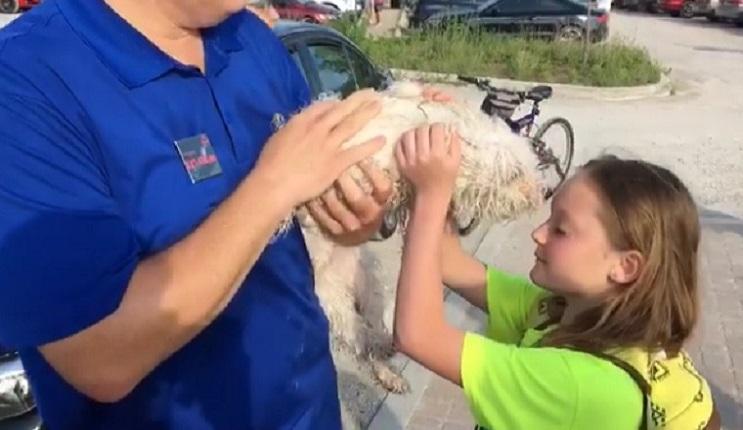 La compasión de este hombre salvó a este perrito de la grave situación en la que estaba 02
