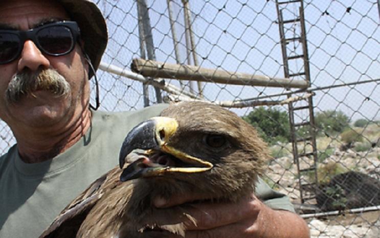 Lo que encontraron los doctores en este águila demuestra el mal que hacemos los humanos 03