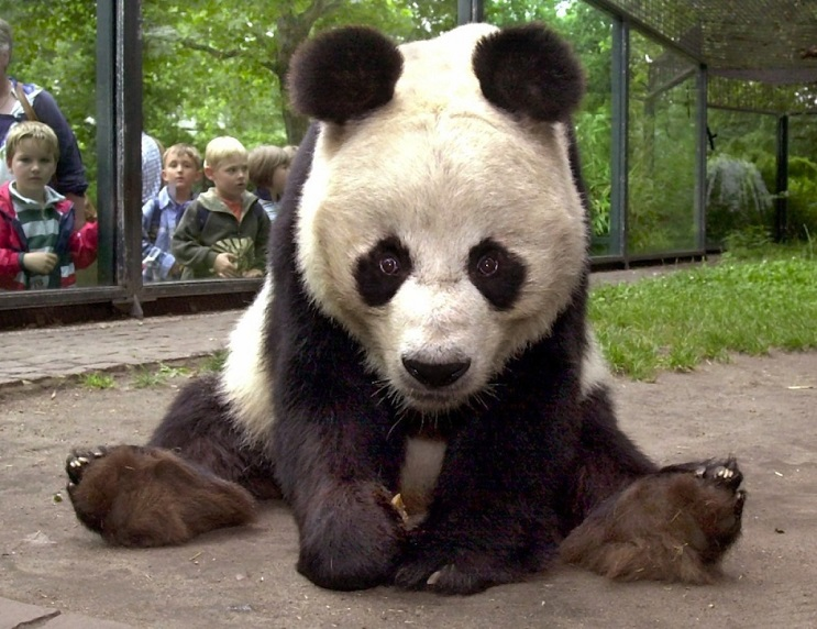 Lo que le sucedió a este león nos muestra porqué los animales no deberían estar en cautiverio - panda