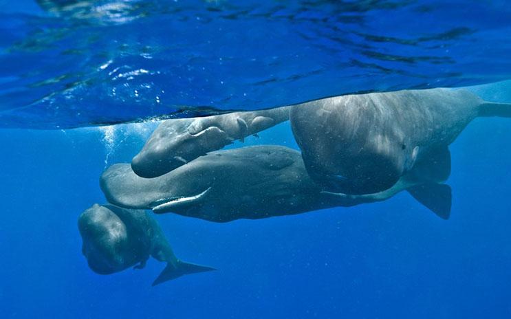 Magnificas fotos del mundo cetáceo por Christopher Swann 02