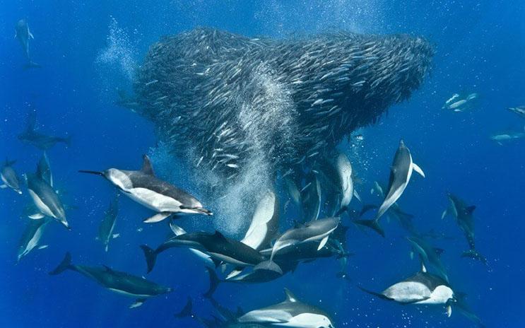 Magnificas fotos del mundo cetáceo por Christopher Swann 04