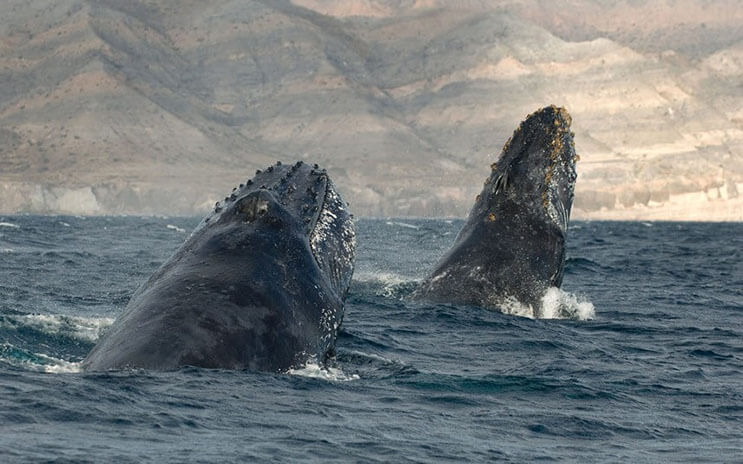 Magnificas fotos del mundo cetáceo por Christopher Swann 05