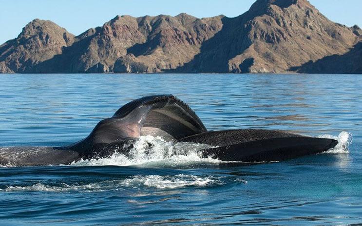 Magnificas fotos del mundo cetáceo por Christopher Swann 06