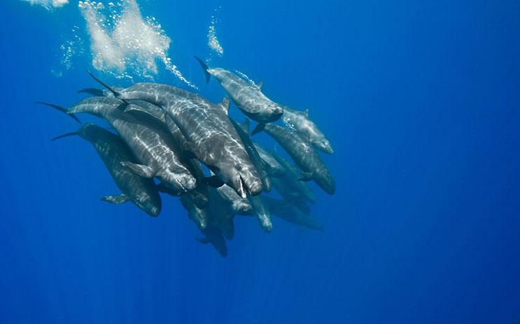 Magnificas fotos del mundo cetáceo por Christopher Swann 07