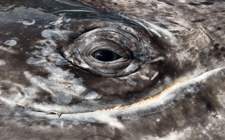 Magnificas fotos del mundo cetáceo por Christopher Swann 08
