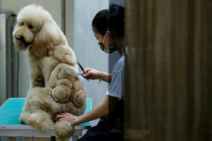 Mascotas lucen cortes de pelo con diseños únicos en Taiwán 1
