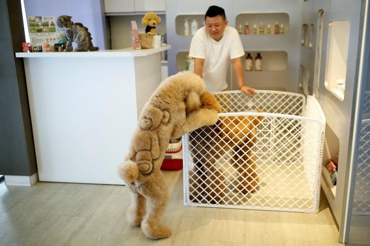 Mascotas lucen cortes de pelo con diseños únicos en Taiwán 2