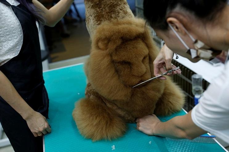 Mascotas lucen cortes de pelo con diseños únicos en Taiwán 4