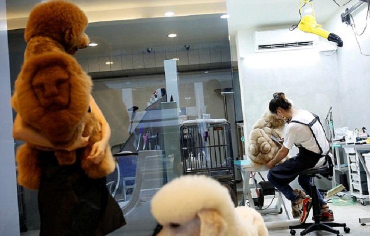 Mascotas lucen cortes de pelo con diseños únicos en Taiwán 5