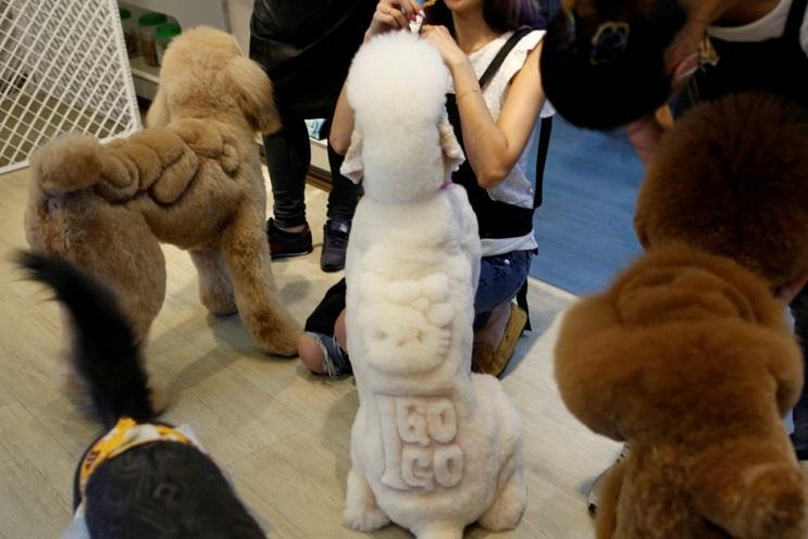 Mascotas lucen cortes de pelo con diseños únicos en Taiwán 7