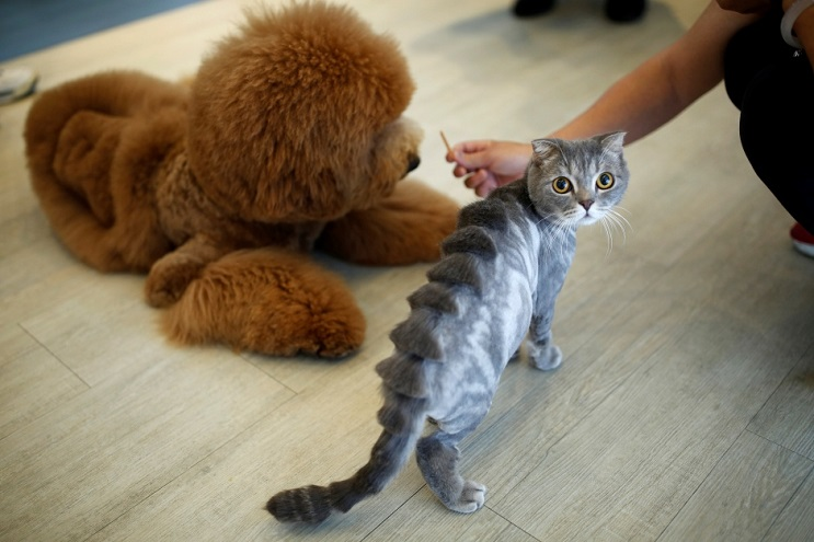 Mascotas lucen cortes de pelo con diseños únicos en Taiwán gato