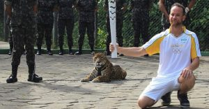 Matan a jaguar durante ceremonia de la Antorcha Olímpica