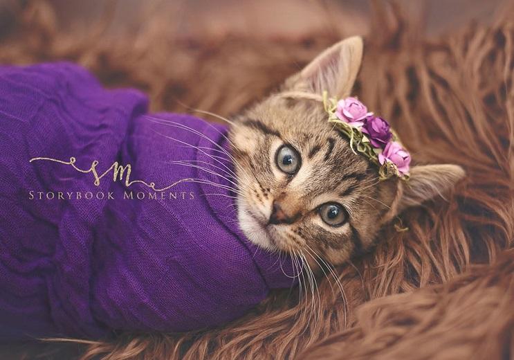 """Niña """"exige"""" a su mamá tomar fotos de su nuevo gato y este es el tierno resultado 1"""