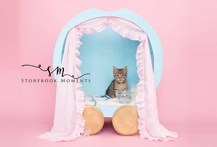 """Niña """"exige"""" a su mamá tomar fotos de su nuevo gato y este es el tierno resultado 3"""