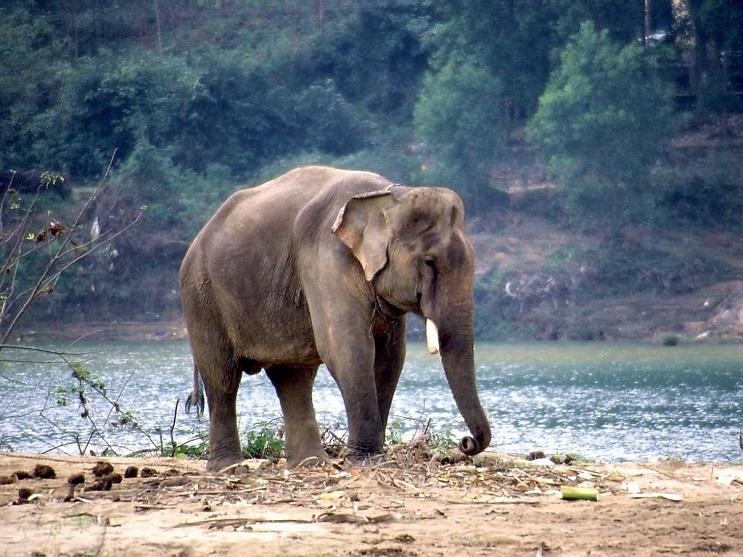 Niña detiene a elefante salvaje con un simple movimiento de mano 2