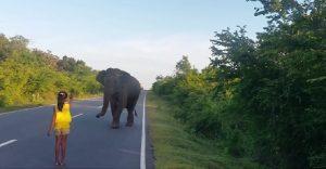 Niña detiene a elefante salvaje con un simple movimiento de mano