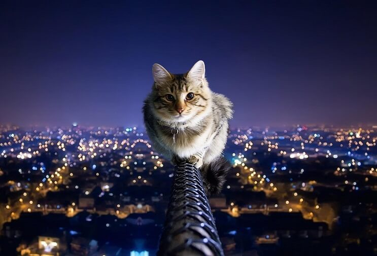 Qué cosa hacen los gatos cuando están solos Pasean, y mucho 010
