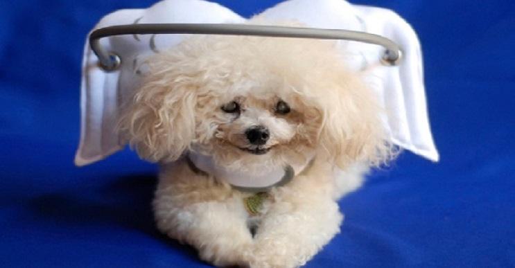 Superación de perrito ciego ayuda a miles de personas 02